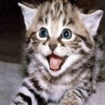 Animal Planet Live: котята