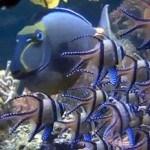 Animal Planet Live: коралловый риф