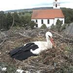 Гнездо аистов, Германия