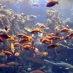 Коралловый риф в океанариуме Лос-Анджелеса