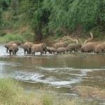 Дикая природа Южной Африки